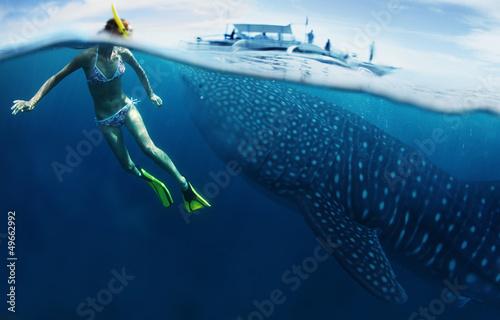 Shark Wallpaper Mural