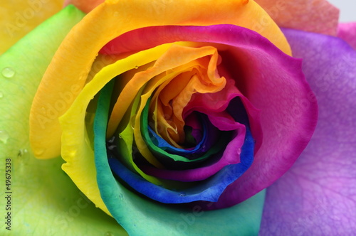 Spoed Foto op Canvas Macro Close up of rainbow rose heart