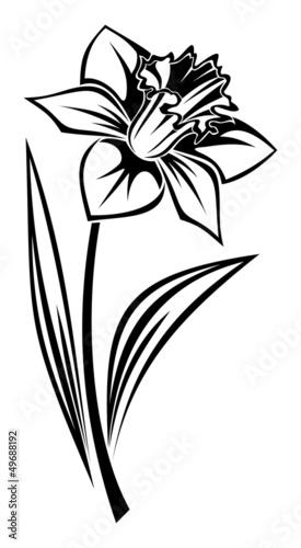 czarna-sylwetka-narcyza-kwiat-ilustracji-wektorowych