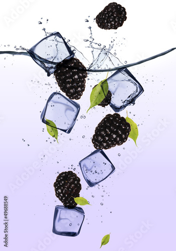 Poster Dans la glace Blackberries with ice cubes