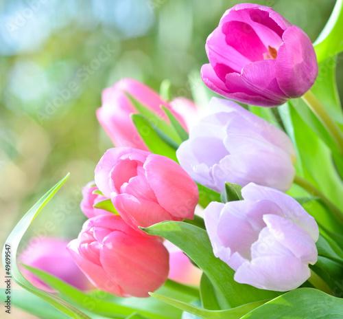 Tulpen, ganz nah - 49699547