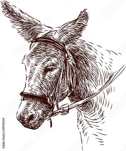 Fotografia donkey