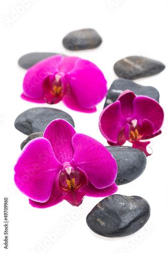 Akustikstoff - Schwarze Steine und Blüten auf weißem Hintergrund