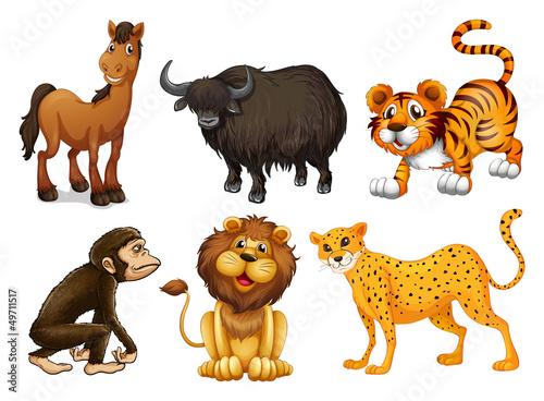 rozne-rodzaje-czworonoznych-zwierzat