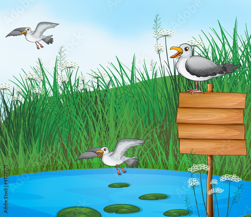 Poster Oiseaux, Abeilles Three birds at the pond with a signboard