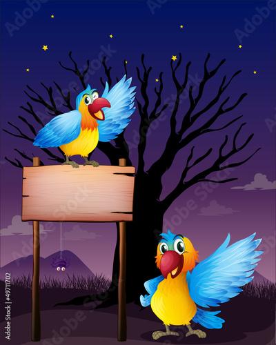 Poster Oiseaux, Abeilles Two parrots near an empty board