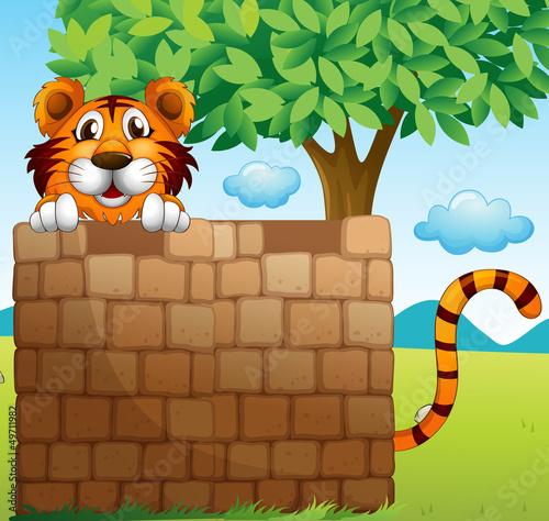 Foto op Aluminium Zoo A tiger hiding on a pile of bricks