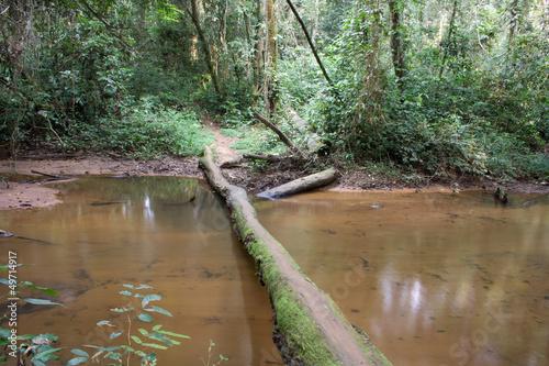 Fotografía  Rainforest crossing I