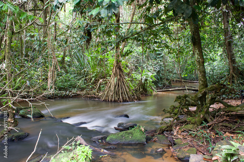 Fotografía  Inside the african rainforest I