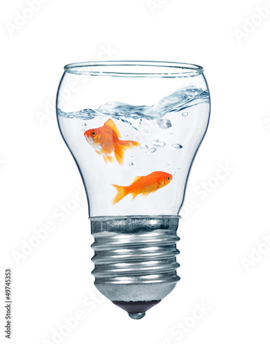 Gold fishes in water inside an electric light bulb Canvas Print