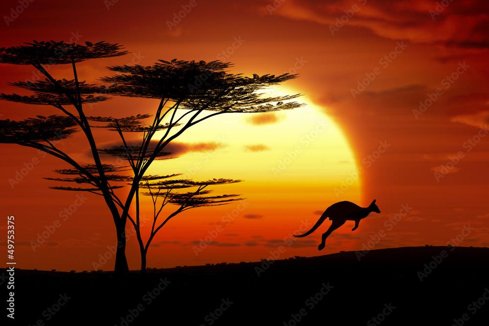 Fototapeta kangaroo sunset australia