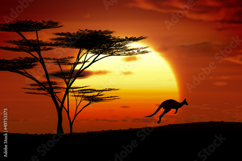 Photo sur Toile Kangaroo kangaroo sunset australia