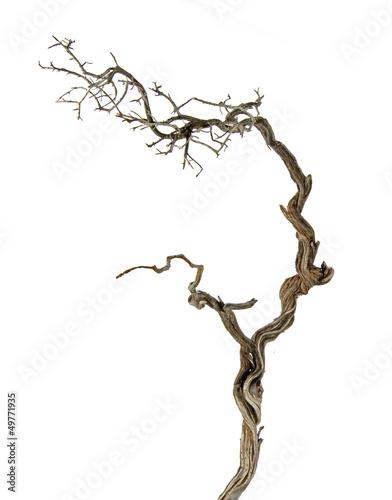 Fotografía  Dry branch