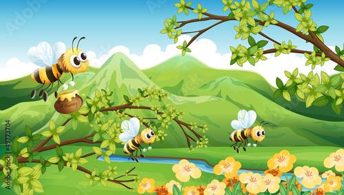 Foto-Stoff - Bees near the mountain (von GraphicsRF)