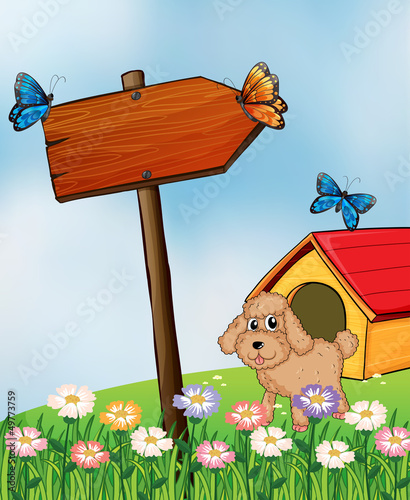 Tuinposter Vlinders A puppy and the wooden arrow