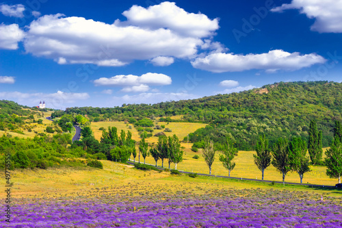 Canvas Print Lavender field in the summer