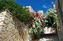 Bougainvillea In Syros, Greece