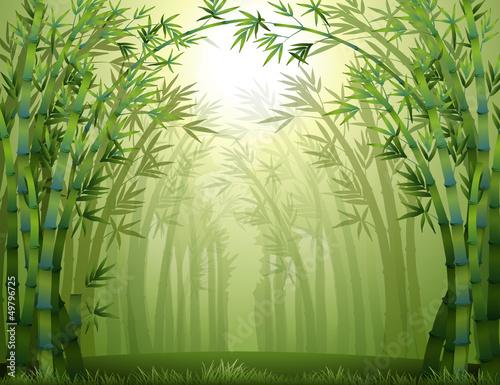 bambusowe-drzewa-w-lesie