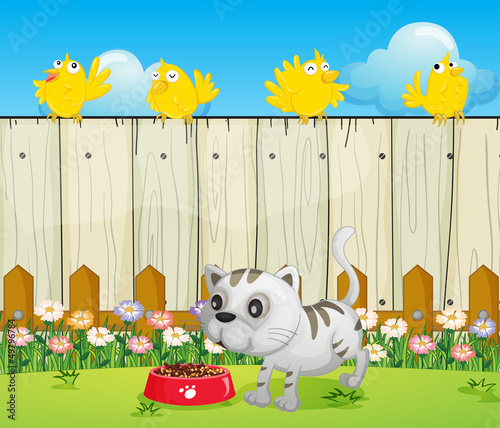 Wall Murals Birds, bees A white cat with a dog food and four yellow birds