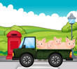 A green vehicle with pigs at the back