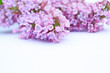 Beautiful lilac background