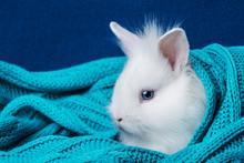 Little Cute White Rabbit In A Soft Scarf
