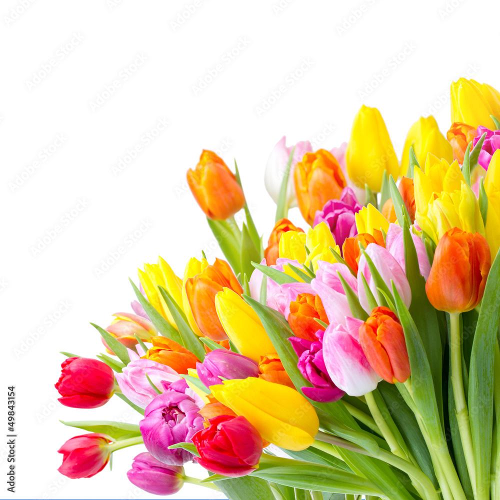 Fototapety, obrazy: Kolorowy bukiet tulipanów