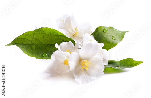 jasmine white flower isolated on white background Tableau sur Toile