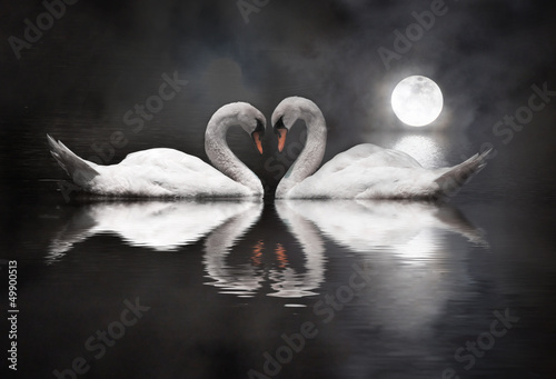 Fototapeta romantic swan during valentine's day