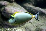 Fototapeta Do akwarium - Ryba tropikalna