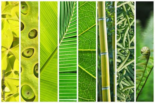 Fotografie, Obraz  Dégradé végétal de vert