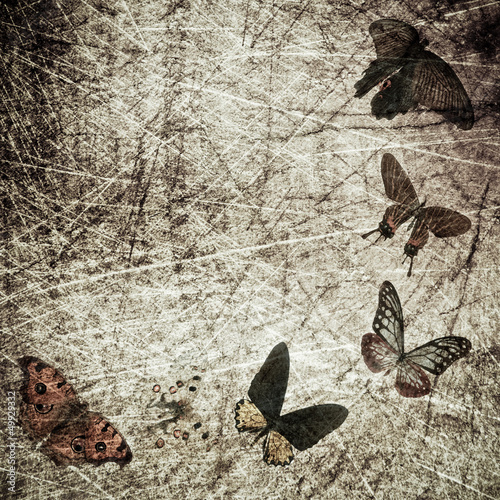 Fotobehang Vlinders in Grunge butterfly wood grunge background