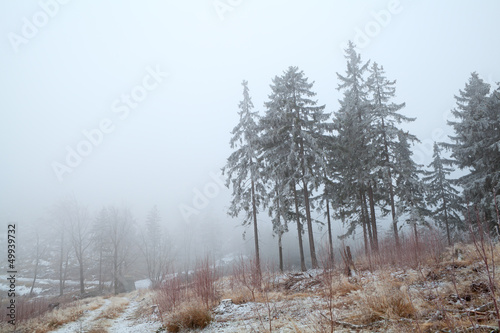 Tuinposter Bos in mist snow and fog in Harz mountains