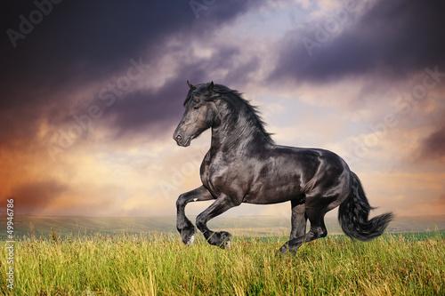 Photo Black Friesian horse gallop