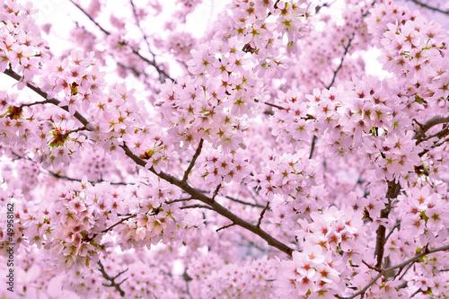 oddzial-wisni-wiosna-krajobraz