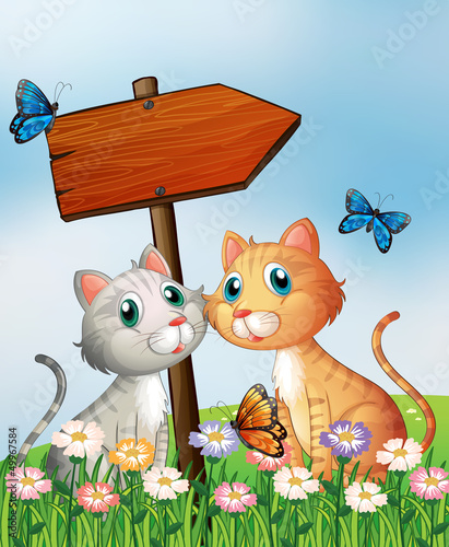 Poster de jardin Chats Two cats in front of an empty wooden arrow board