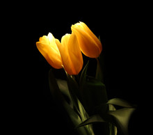 Three Yellow Glowing Flowers On A Dark