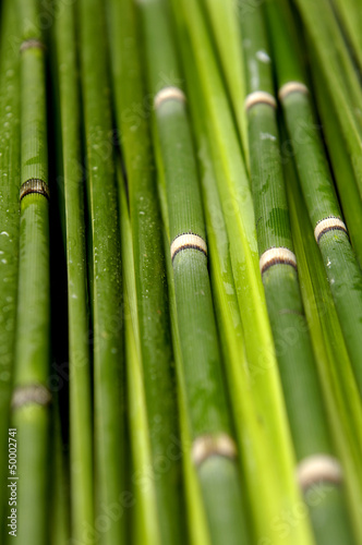bambusowe-tlo