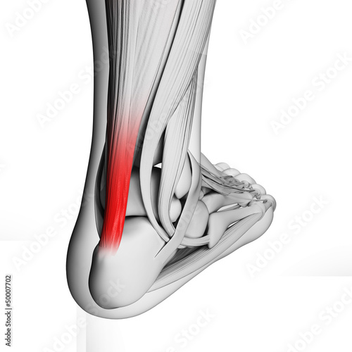 Photo 3d rendered illustration of the achilles tendon