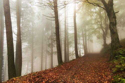 Spoed Foto op Canvas Bos in mist Fog in the forest