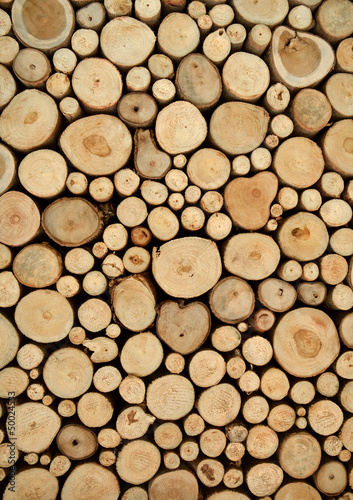 tree stumps background - 50024533