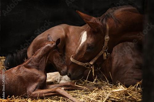 Poster Paarden Begrüßung Stute und Fohlen