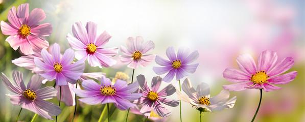 Fototapeta Romantyczny kwiaty