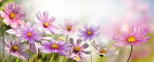 Fototapeta premium kwiaty