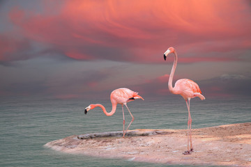Fototapeta Zwierzęta Pink flamingo