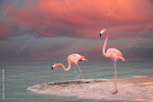 Photo sur Aluminium Flamingo Pink flamingo