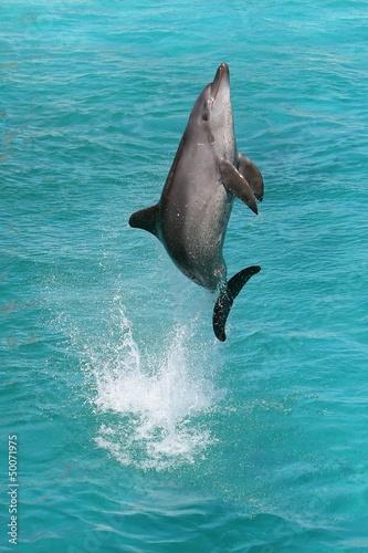 Staande foto Dolfijnen Dolphin Jump