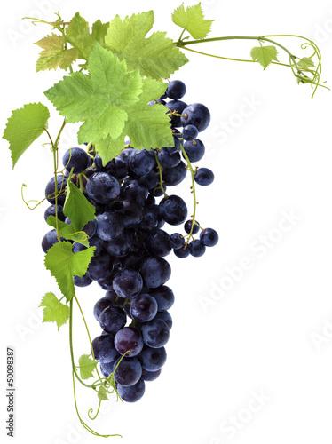 grappe de raisin noir Fototapete