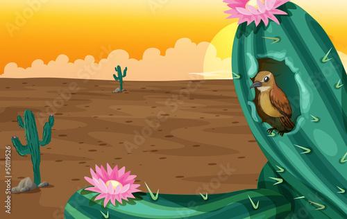 Poster Oiseaux, Abeilles A big cactus plant with a bird