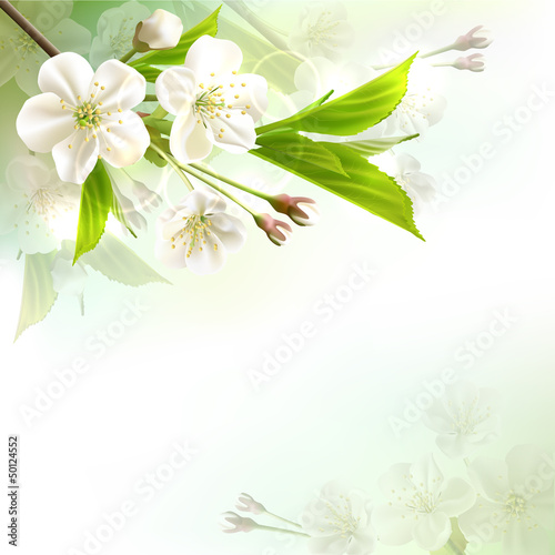Blossoming tree branch with white flowers